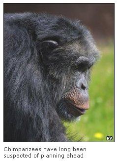 chimp-1