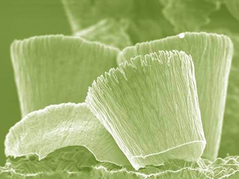 gwh-nanocups