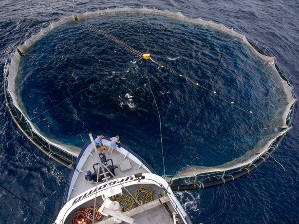 tuna-net-southern-ocean