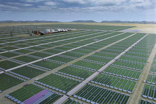 algae fuels image