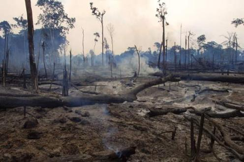 http://isiria.files.wordpress.com/2009/06/brazilian-rain-forest-destruction.jpg