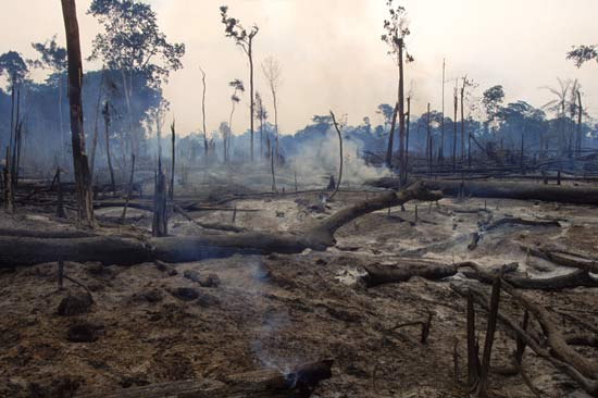 brazilian rain forest destruction